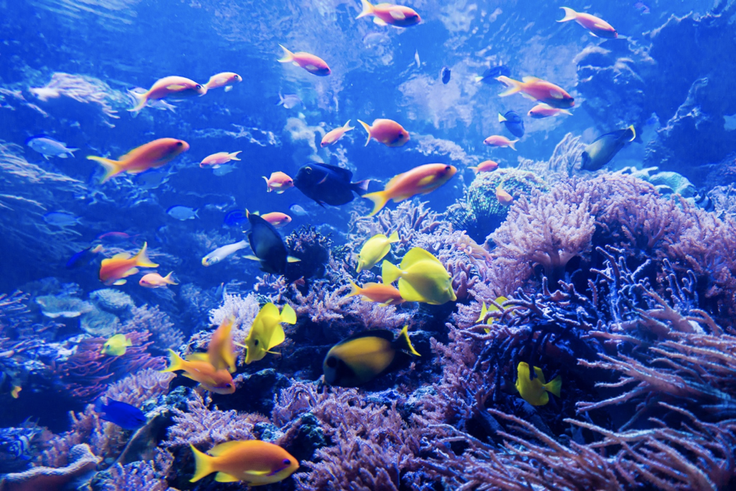 Explore the Great Barrier Reef!