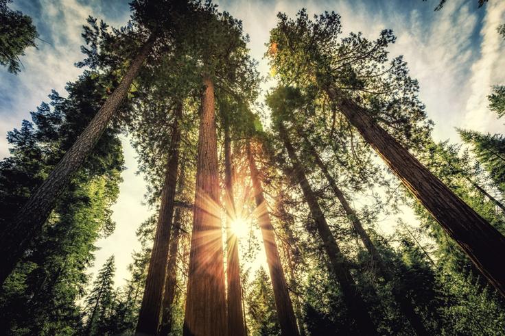 Redwood Forest Virtual Adventure