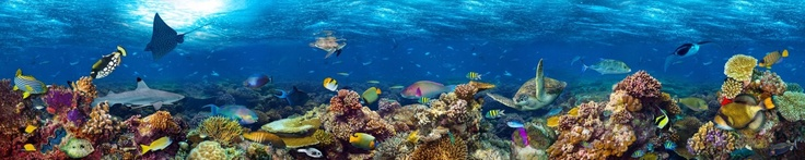 coral reef and sealife