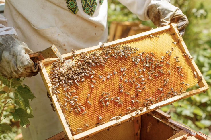Virtual Beekeeping Field Trip