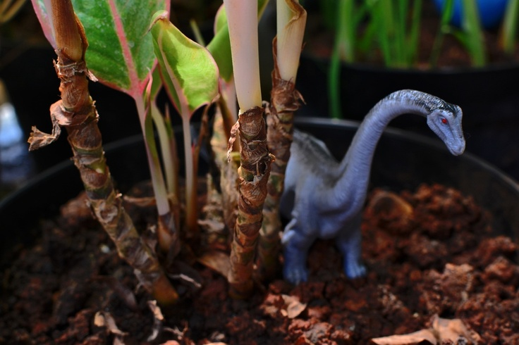 Dinosaur toy in plant pot