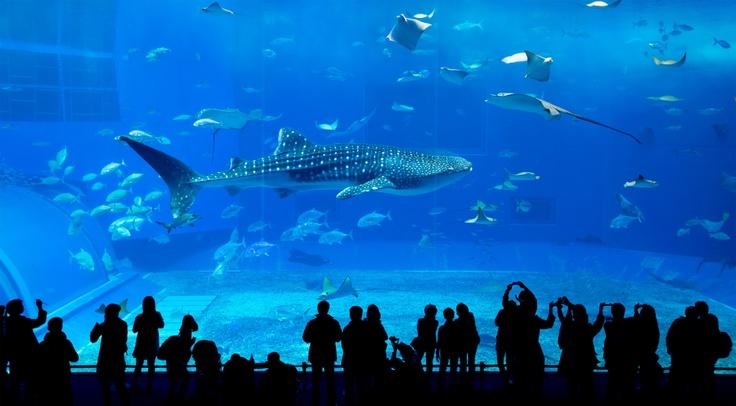 Aquarium with whale shark