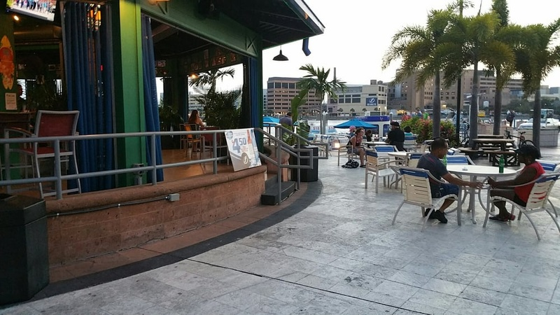 The Best Dog Friendly Restaurants And Bars In Tampa Bay Doorsteps Rent