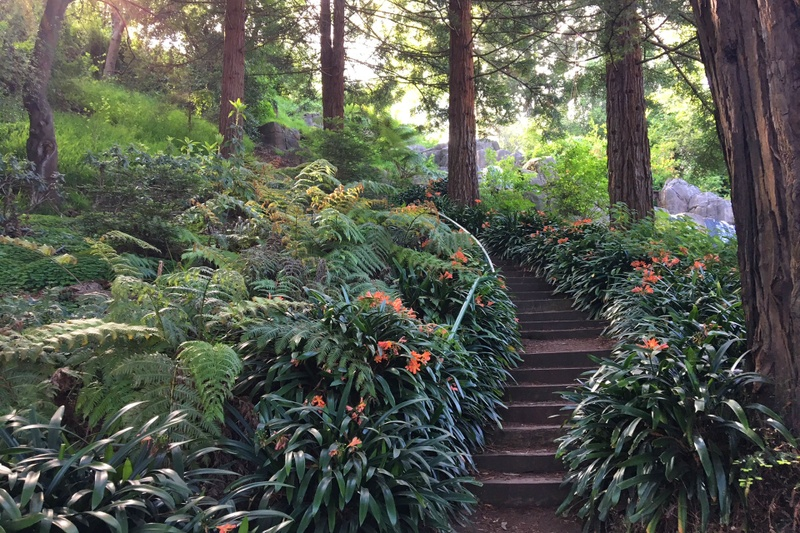Flora and Fauna in Golden Gate Park